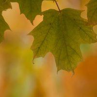 fall-leafs-3-low