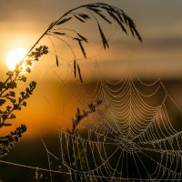 spider-web-low
