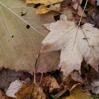 autumn-leaves-low